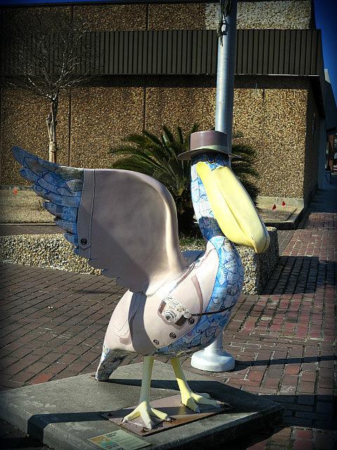 Tourist Pelican